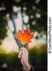Young woman hand with autumn maple leaf