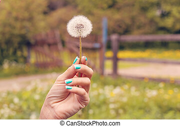 Young woman hand with dandelion on a nature background at spring time. Light and cute background.