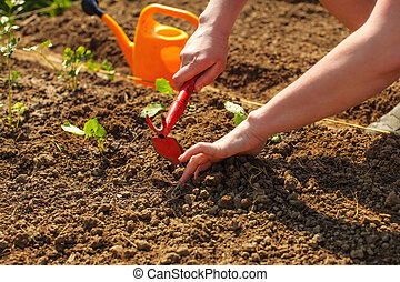 Young woman hands digging little hole with small grub hoe and hand for planting seedling into ground with orange sprinkling can in background.
