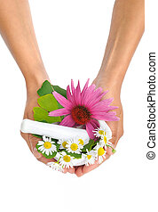 Young  woman holding mortar with herbs  Echinacea, ginkgo, chamomile