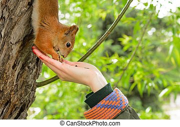 Young woman in a hat feeding a squirrel with hand nuts