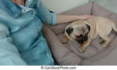 Young woman pet her dog sitting on the floor. Cute puppy pug...