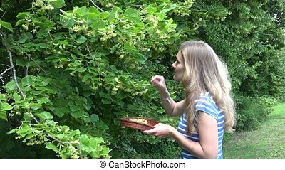young woman pick linden blossom and put into wicker basket ....