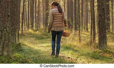 young woman picking mushrooms in autumn forest - picking ...