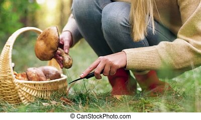 young woman picking mushrooms in autumn forest - season and...