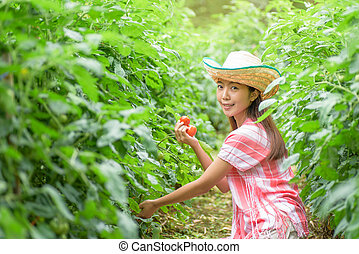 Young woman picking tomatoes in vegetable garden
