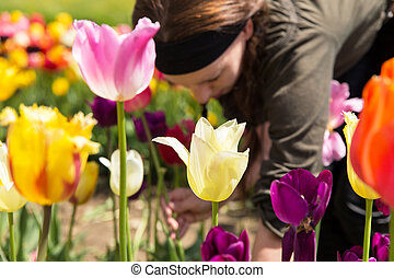 young woman picking tulips in the garden
