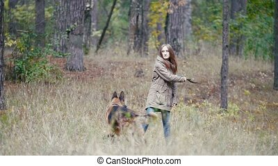 Young woman playing with a shepherd dog in autumn forest - runs for the thrown stick, telephoto