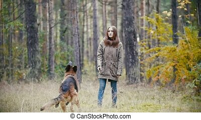 Young woman playing with a shepherd dog in autumn forest - throws a stick, slow motion