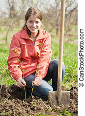 woman resetting raspberry sprouts - young woman resetting ...