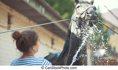 Young woman splashing water on a black horse in the stable,...
