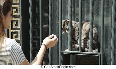 Young woman stroking a fluffy cat on the street