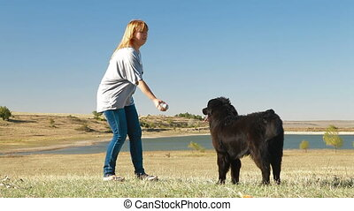 Training Newfoundland Dog Outdoor - Young Woman Training...