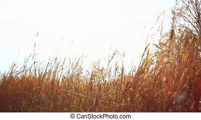 Young woman walking in a field on a background of sunlight