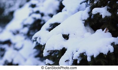 Young woman walking in snow forest