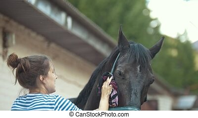 Young woman washes the horse with a brush. Horse getting...
