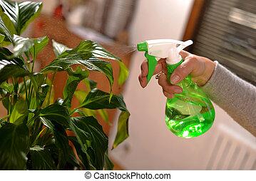 young woman watering houseplants