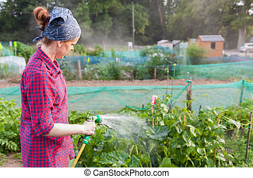 Young woman watering zucchini in an allotment