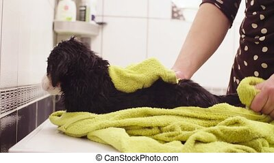 Young woman wiping a puppy with a towel