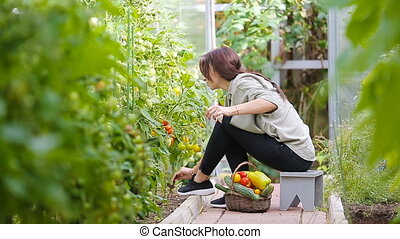 Young woman with basket of greenery and vegetables in the greenhouse. Time to harvest.