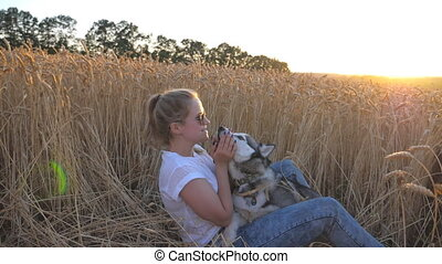 Young woman with blonde hair sitting among ripe spikelets at meadow and stroking her siberian husky at sunset. Happy girl in sunglasses kissing her pet at golden wheat field. Side view Slow motion