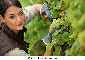 young woman working in a vineyard
