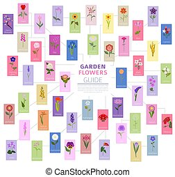 Your garden guide. Top 50 most popular flowers infographic....