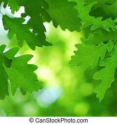yppig, och, grön, ek lämnar, in, tidigt, fjäder