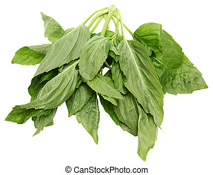 Yu Choy Leaves - Yu Choy Leaf bundle over white.