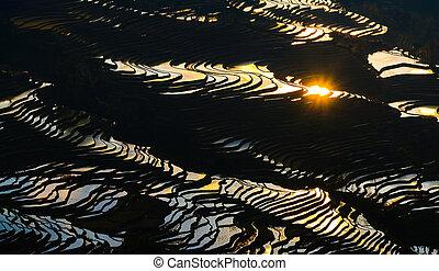 Yuanyang rice terrace at sunset, Yunnan province, China -...