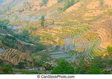 yuanyang, yunnan, riso, porcellana, terrazzi