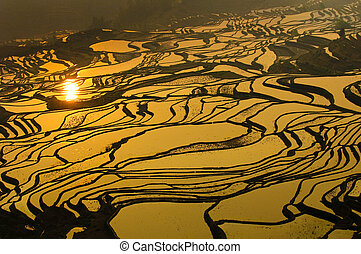 yuanyang, yunnan, ryż, porcelana, tarasy