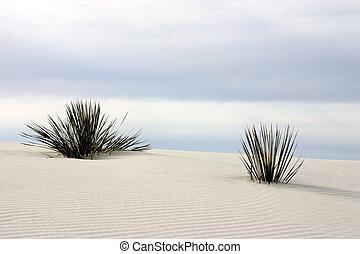 yuca, arenas blancas