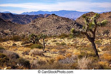 Yucca Brevifolia Mountains Mojave Desert Joshua Tree...