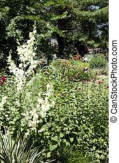 Yucca Plant in Garden