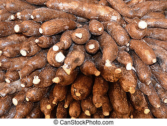 Yucca Root - Close up of Yucca Roots - isolated