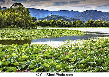 Yue Feng Pagoda Lotus Garden Reflection Summer Palace Beijing, C