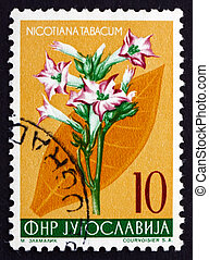 YUGOSLAVIA - CIRCA 1955: a stamp printed in the Yugoslavia shows Tobacco, Nicotiana Tabacum, Perennial Herbaceous Plant, circa 1955