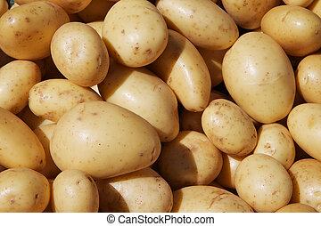 Yukon Potatoes - Brightly sun lit pile of yukon potatoes at ...