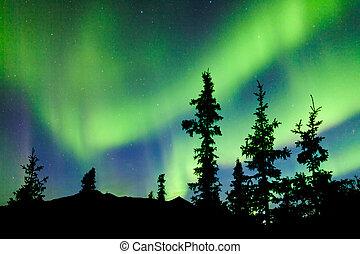 Yukon taiga spruce Northern Lights Aurora borealis - Intense...