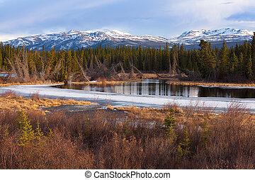 Boreal forest taiga wetland marsh spring thaw in Yukon Territory, Canada