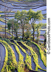 yunnan, terrazzi, porcellana, yuanyang, riso
