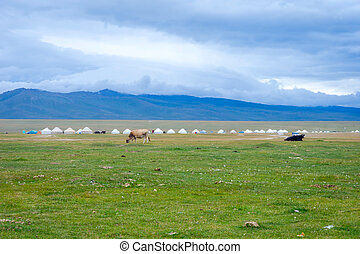 Yurts and cows by Song Kul lake, Kyrgyzstan, Central Asia