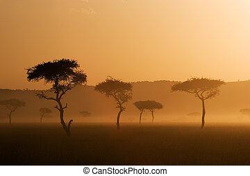 západ slunce, do, massai, mara