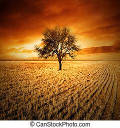 západ slunce, strom