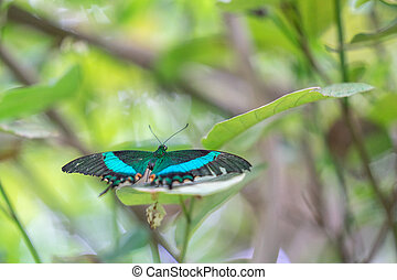 zébré de rayures, edimbourg, foyer., swallowtail, insecte, papillon, world., sélectionné, vert