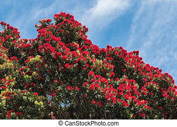 zélande, arbre, pohutukawa, nouveau, fleurs, fleur, noël, rouges