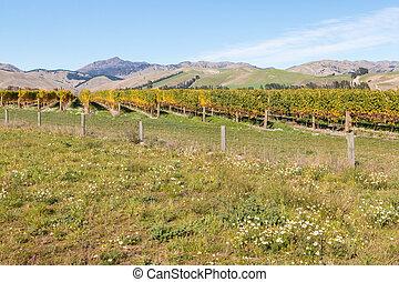 zélande, nouveau, automne, vignoble