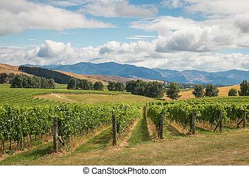 zélande, nouveau, paysage, vignoble