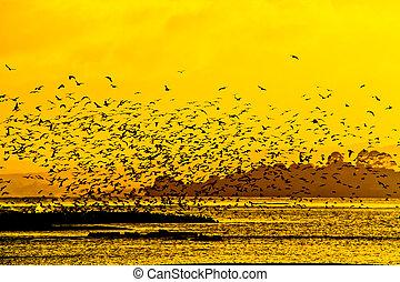 zélande, voler, rotorua, lac, lot, nouveau, oiseau